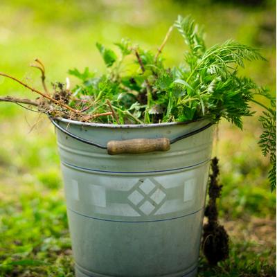 metal bucket with yard debris